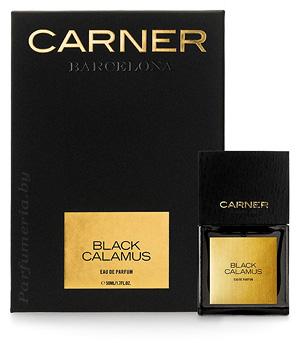 Black Calamus
